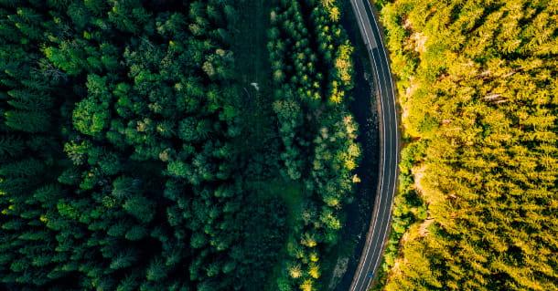 Carretera que travessa un bosc